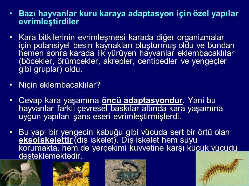 Bazı hayvanlar kuru karaya adaptasyon için özel yapılar evrimleştirdiler Kara bitkilerinin evrimleşmesi karada diğer organizmalar için potansiyel besin kaynakları oluşturmuş oldu ve bundan hemen sonra karada ilk yürüyen hayvanlar eklembacaklılar (böcekler, örümcekler, akrepler, centipedler ve yengeçler gibi gruplar) oldu.