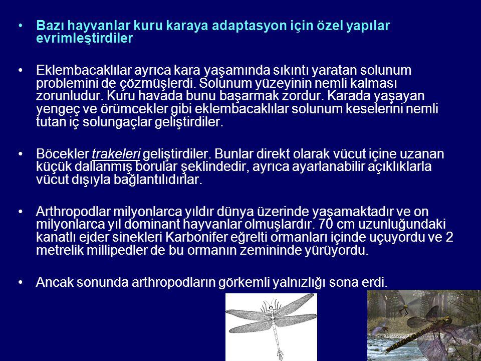 Bazı hayvanlar kuru karaya adaptasyon için özel yapılar evrimleştirdiler Eklembacaklılar ayrıca kara yaşamında sıkıntı yaratan solunum problemini de çözmüşlerdi.