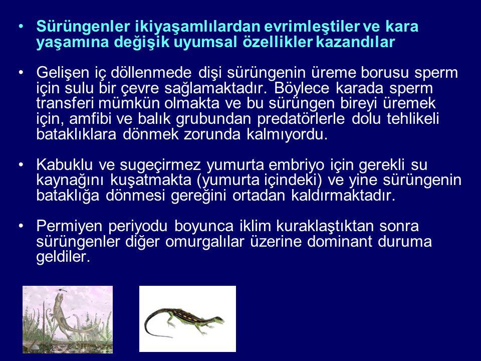 Sürüngenler ikiyaşamlılardan evrimleştiler ve kara yaşamına değişik uyumsal özellikler kazandılar Gelişen iç döllenmede dişi sürüngenin üreme borusu sperm için sulu bir çevre sağlamaktadır.