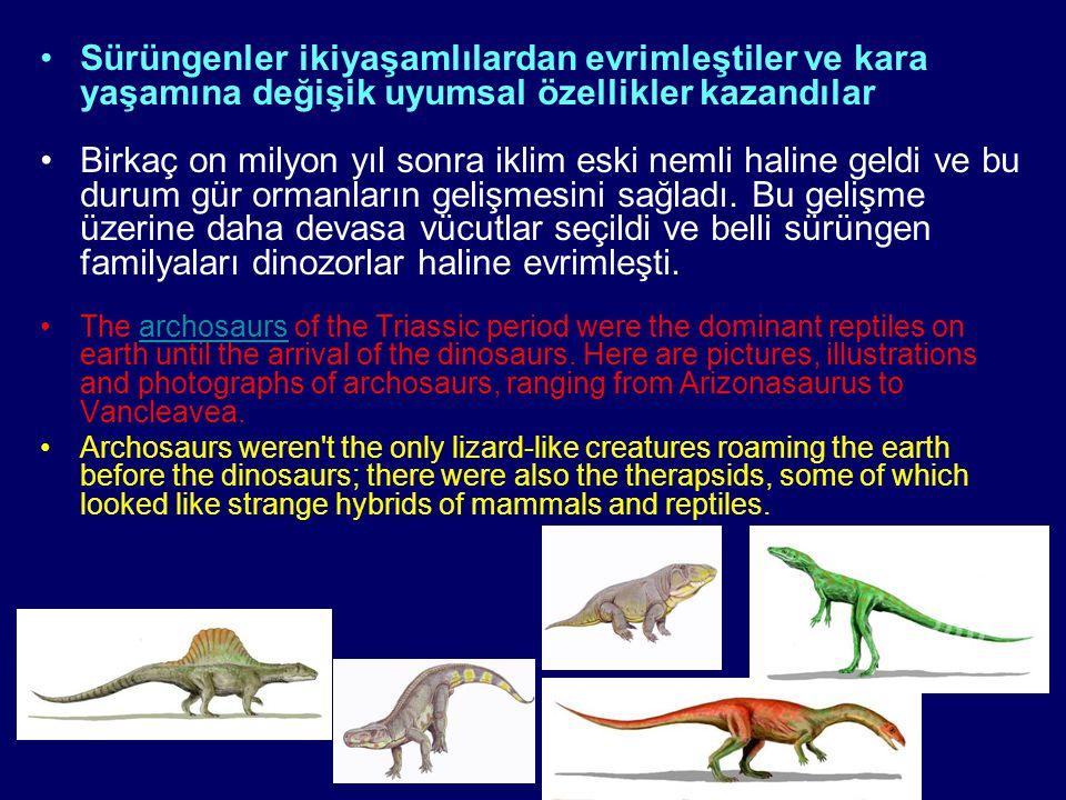 Sürüngenler ikiyaşamlılardan evrimleştiler ve kara yaşamına değişik uyumsal özellikler kazandılar Birkaç on milyon yıl sonra iklim eski nemli haline g