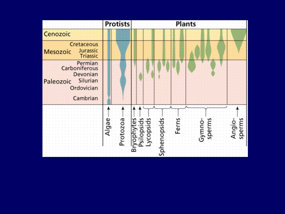 Sürüngenler ikiyaşamlılardan evrimleştiler ve kara yaşamına değişik uyumsal özellikler kazandılar Bu çeşitlenme dinozorları karaların dominant hayvanları yaptı.