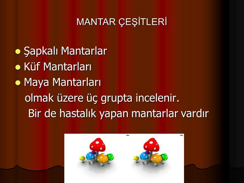 Şapkalı Mantarlar Şapkalı Mantarlar Küf Mantarları Küf Mantarları Maya Mantarları Maya Mantarları olmak üzere üç grupta incelenir. olmak üzere üç grup