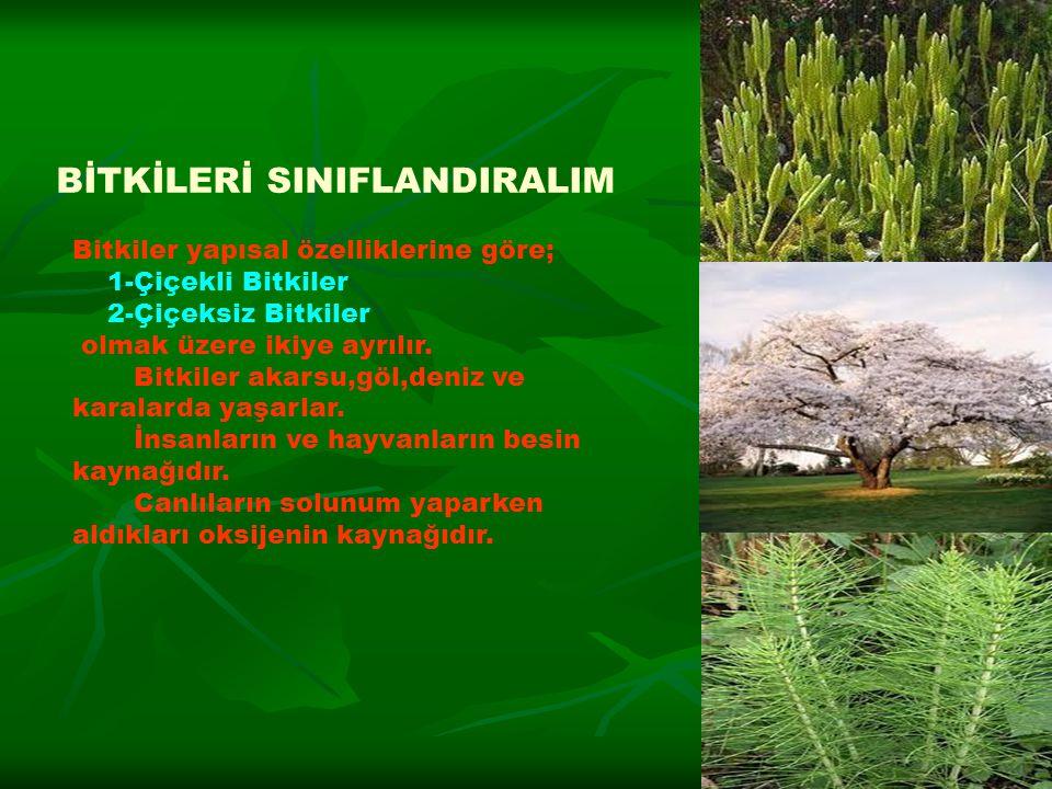 Bitkiler yapısal özelliklerine göre; 1-Çiçekli Bitkiler 2-Çiçeksiz Bitkiler olmak üzere ikiye ayrılır. Bitkiler akarsu,göl,deniz ve karalarda yaşarlar