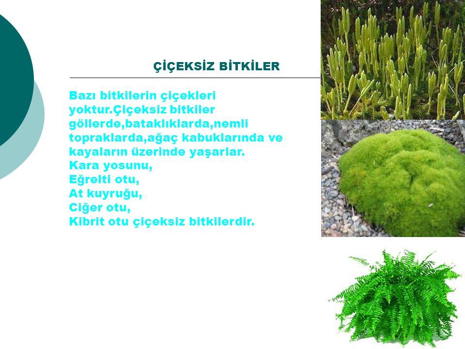 Bazı bitkilerin çiçekleri yoktur.Çiçeksiz bitkiler göllerde,bataklıklarda,nemli topraklarda,ağaç kabuklarında ve kayaların üzerinde yaşarlar. Kara yos