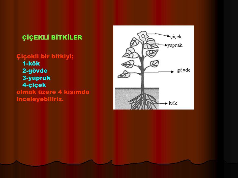 Çiçekli bir bitkiyi; 1-kök 2-gövde 3-yaprak 4-çiçek olmak üzere 4 kısımda inceleyebiliriz. ÇİÇEKLİ BİTKİLER