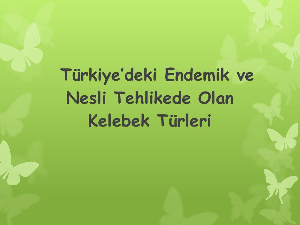 Türkiye'deki Endemik ve Nesli Tehlikede Olan Kelebek Türleri