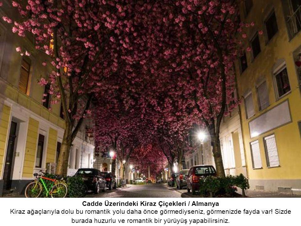 Cadde Üzerindeki Kiraz Çiçekleri / Almanya Kiraz ağaçlarıyla dolu bu romantik yolu daha önce görmediyseniz, görmenizde fayda var.