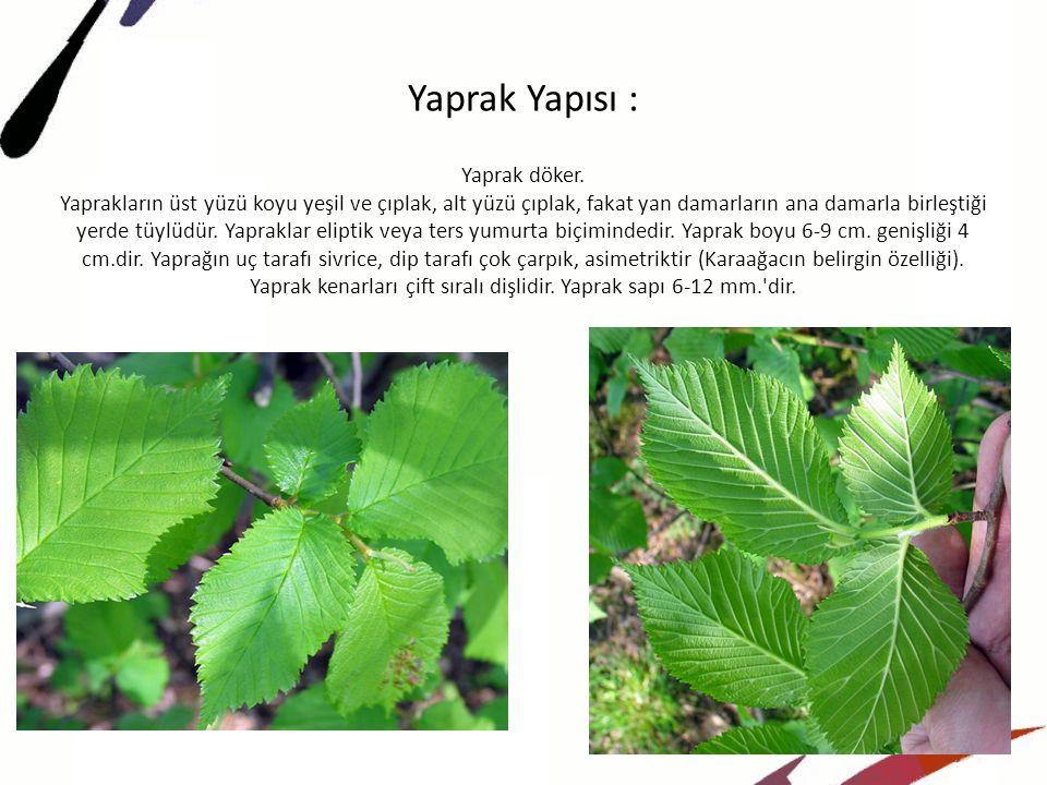 Yaprak Yapısı : Yaprak döker.