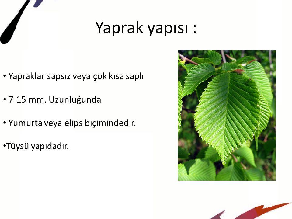 Yaprak yapısı : Yapraklar sapsız veya çok kısa saplı 7-15 mm.