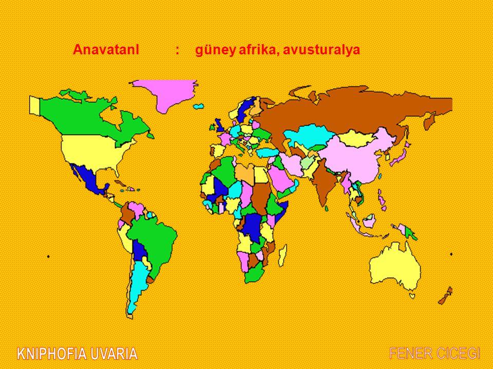 AnavatanI : güney afrika, avusturalya
