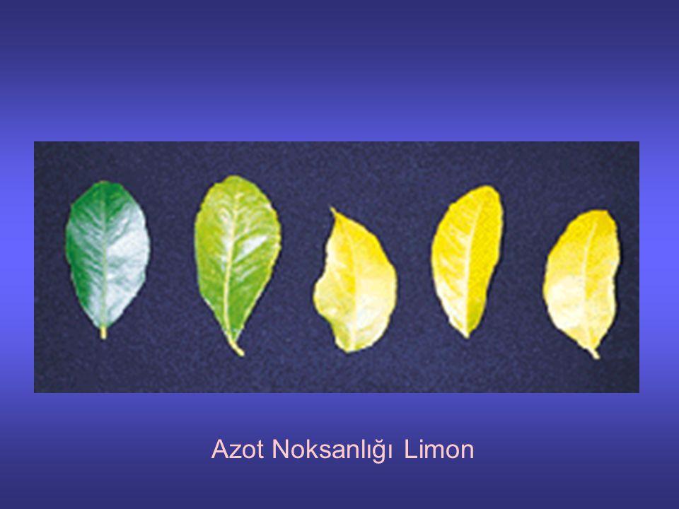 Azot Noksanlığı Limon