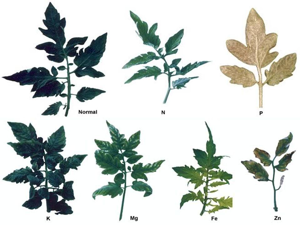 Bitki besin elementinin miktarı ile bitki gelişimi