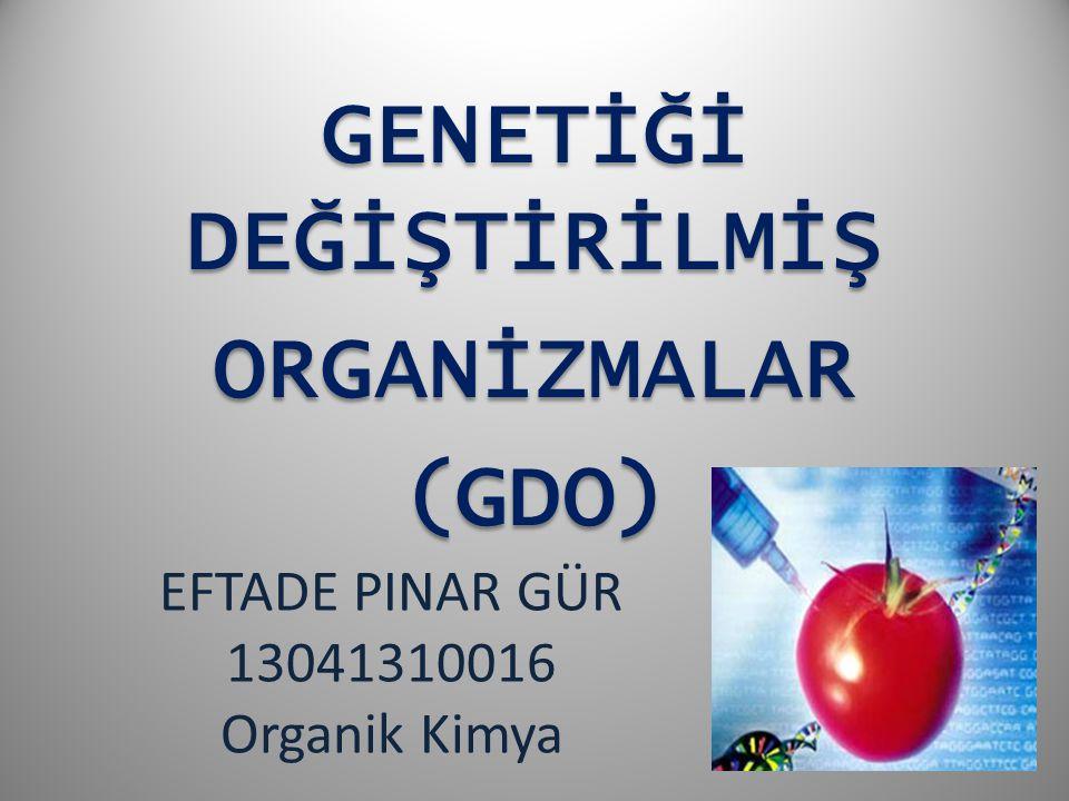 EFTADE PINAR GÜR 13041310016 Organik Kimya GENETİĞİ DEĞİŞTİRİLMİŞ ORGANİZMALAR(GDO)