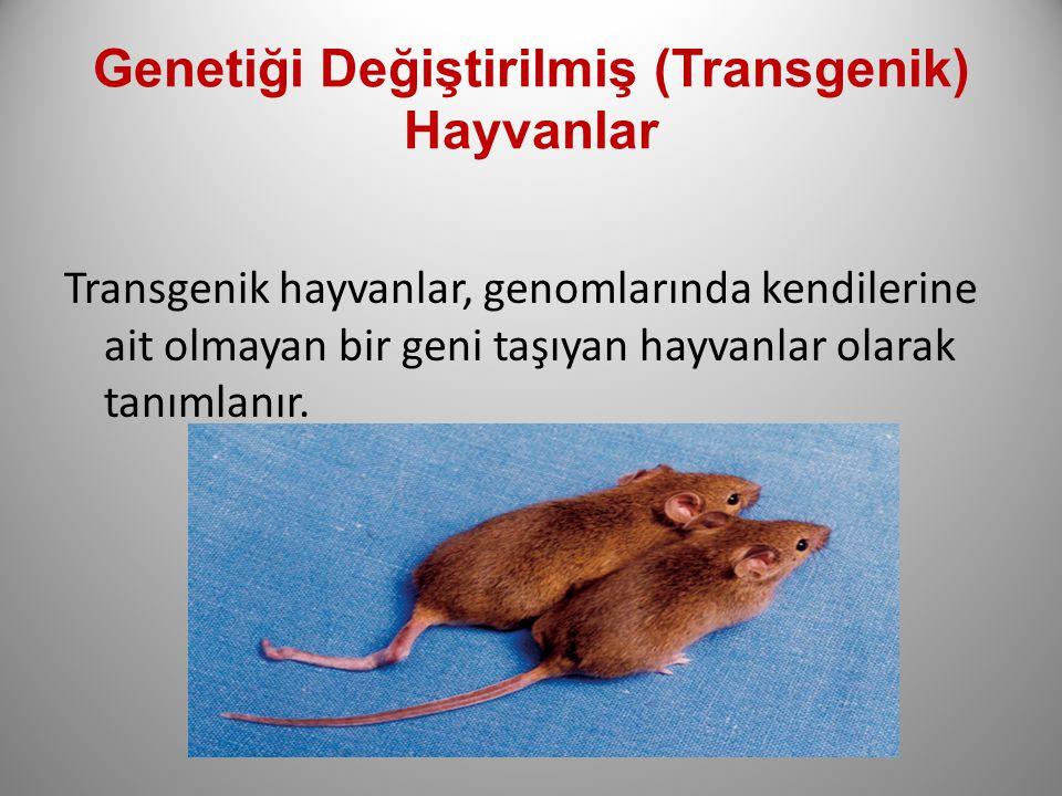 Genetiği Değiştirilmiş (Transgenik) Hayvanlar Transgenik hayvanlar, genomlarında kendilerine ait olmayan bir geni taşıyan hayvanlar olarak tanımlanır.