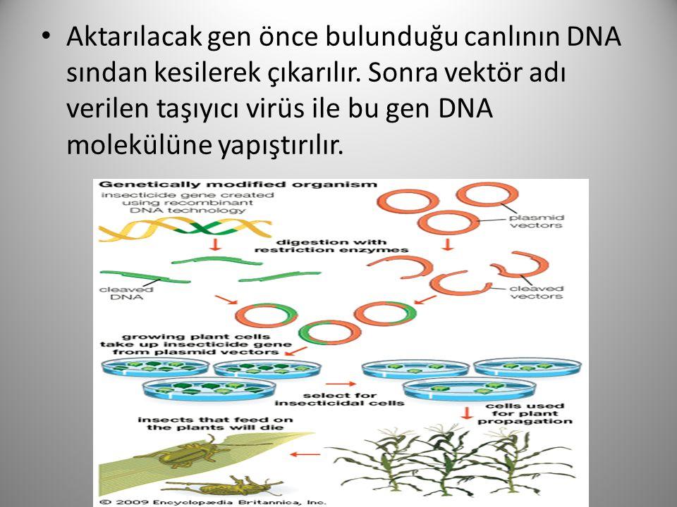 Aktarılacak gen önce bulunduğu canlının DNA sından kesilerek çıkarılır. Sonra vektör adı verilen taşıyıcı virüs ile bu gen DNA molekülüne yapıştırılır