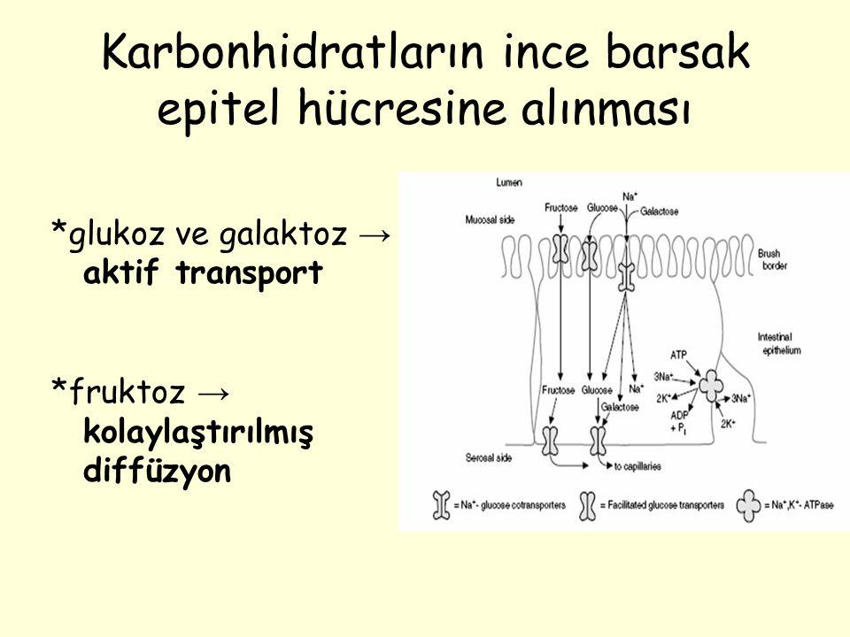Karbonhidratların ince barsak epitel hücresine alınması *glukoz ve galaktoz → aktif transport *fruktoz → kolaylaştırılmış diffüzyon