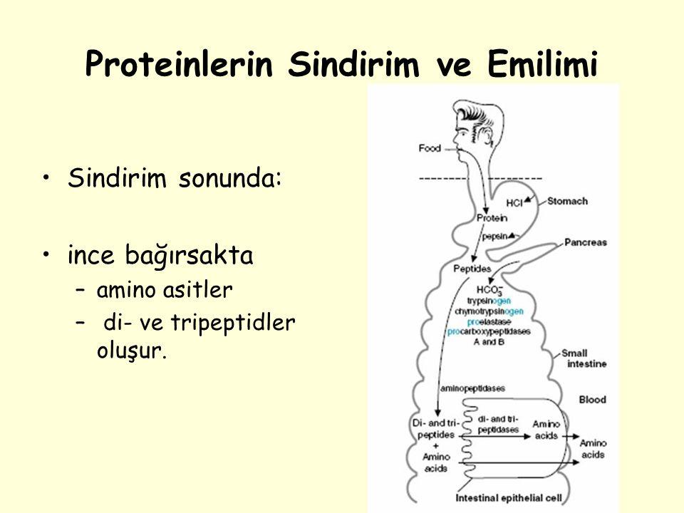 Proteinlerin Sindirim ve Emilimi Sindirim sonunda: ince bağırsakta –amino asitler – di- ve tripeptidler oluşur.