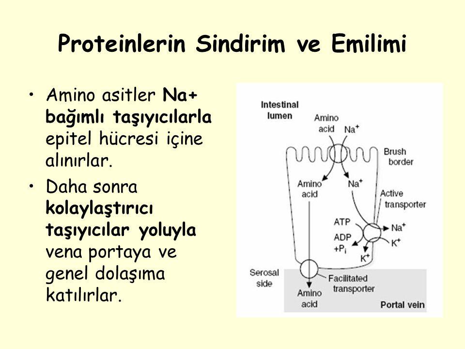Proteinlerin Sindirim ve Emilimi Amino asitler Na+ bağımlı taşıyıcılarla epitel hücresi içine alınırlar. Daha sonra kolaylaştırıcı taşıyıcılar yoluyla