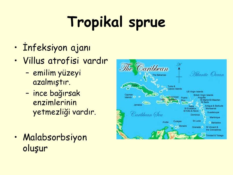 Tropikal sprue İnfeksiyon ajanı Villus atrofisi vardır –emilim yüzeyi azalmıştır. –ince bağırsak enzimlerinin yetmezliği vardır. Malabsorbsiyon oluşur