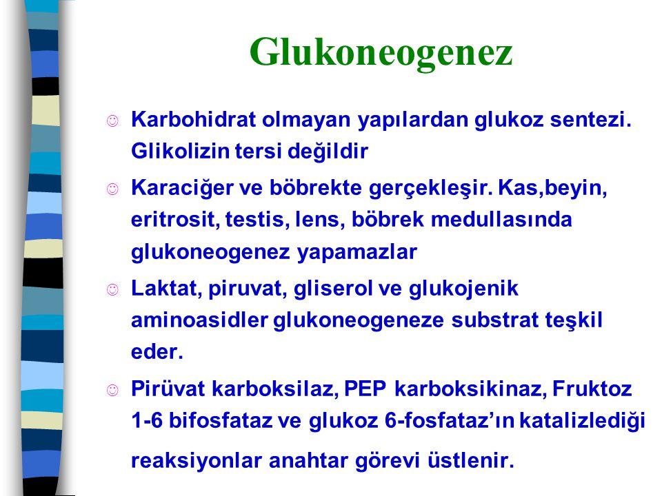 Glukoneogenez J Karbohidrat olmayan yapılardan glukoz sentezi. Glikolizin tersi değildir J Karaciğer ve böbrekte gerçekleşir. Kas,beyin, eritrosit, te