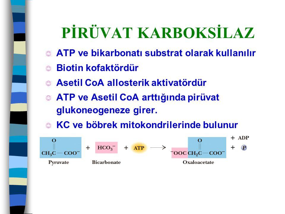 PİRÜVAT KARBOKSİLAZ J ATP ve bikarbonatı substrat olarak kullanılır J Biotin kofaktördür J Asetil CoA allosterik aktivatördür J ATP ve Asetil CoA artt