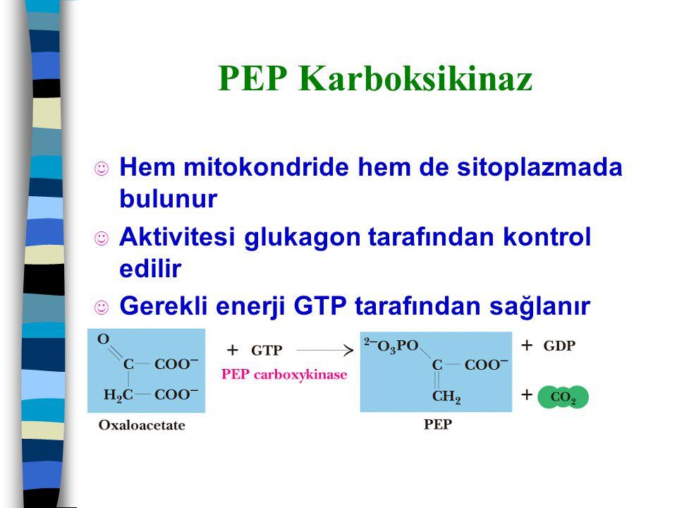 PEP Karboksikinaz J Hem mitokondride hem de sitoplazmada bulunur J Aktivitesi glukagon tarafından kontrol edilir J Gerekli enerji GTP tarafından sağla