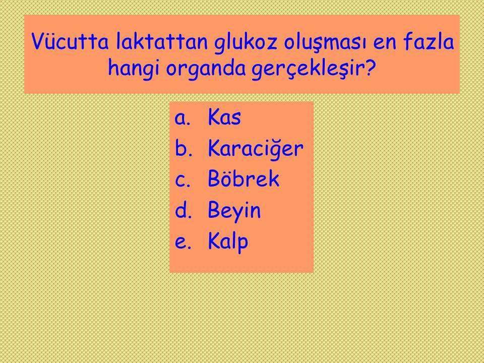 Vücutta laktattan glukoz oluşması en fazla hangi organda gerçekleşir? a.Kas b.Karaciğer c.Böbrek d.Beyin e.Kalp