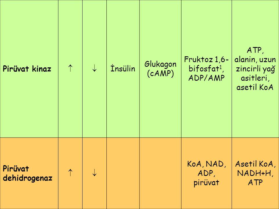 Pirüvat kinaz  İnsülin Glukagon (cAMP) Fruktoz 1,6- bifosfat 1, ADP/AMP ATP, alanin, uzun zincirli yağ asitleri, asetil KoA Pirüvat dehidrogenaz 