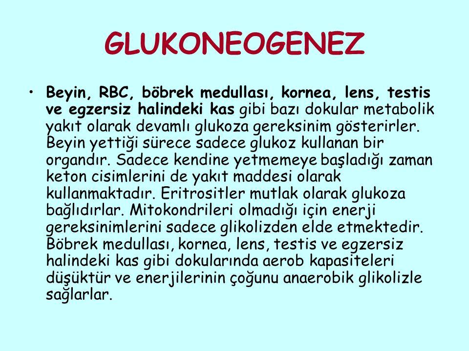 İnsanda glukozun üç kaynağı bulunmaktadır: Besin maddeleri Glikojen depoları Glukoneogenez iki dokuda glikojen depolanmaktadır.