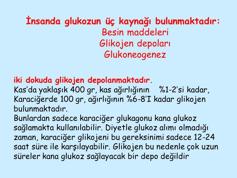 İnsanda glukozun üç kaynağı bulunmaktadır: Besin maddeleri Glikojen depoları Glukoneogenez iki dokuda glikojen depolanmaktadır. Kas'da yaklaşık 400 gr