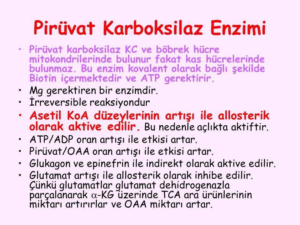 Pirüvat Karboksilaz Enzimi Pirüvat karboksilaz KC ve böbrek hücre mitokondrilerinde bulunur fakat kas hücrelerinde bulunmaz. Bu enzim kovalent olarak