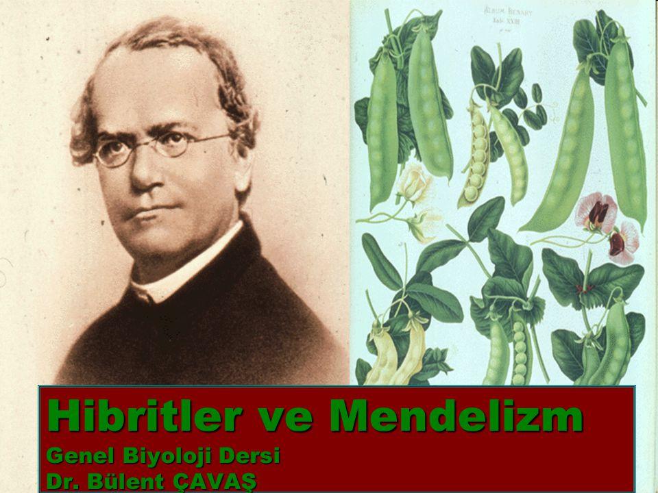 Hibritler ve Mendelizm Genel Biyoloji Dersi Dr. Bülent ÇAVAŞ