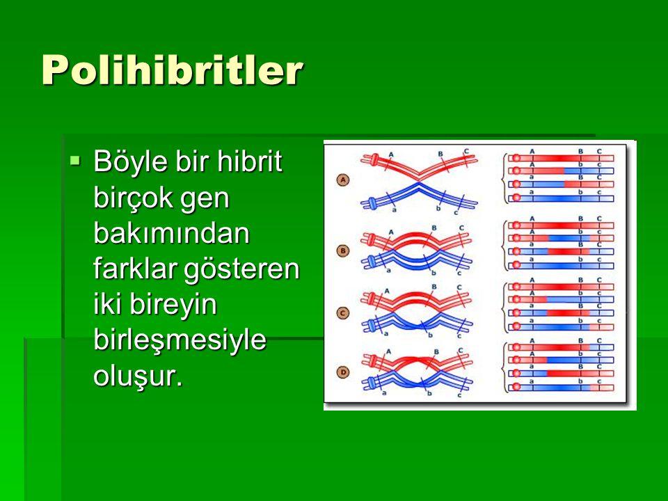 Polihibritler  Böyle bir hibrit birçok gen bakımından farklar gösteren iki bireyin birleşmesiyle oluşur.