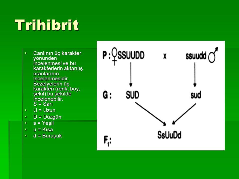 Trihibrit  Canlının üç karakter yönünden incelenmesi ve bu karakterlerin aktarılış oranlarının incelenmesidir. Bezelyelerin üç karakteri (renk, boy,
