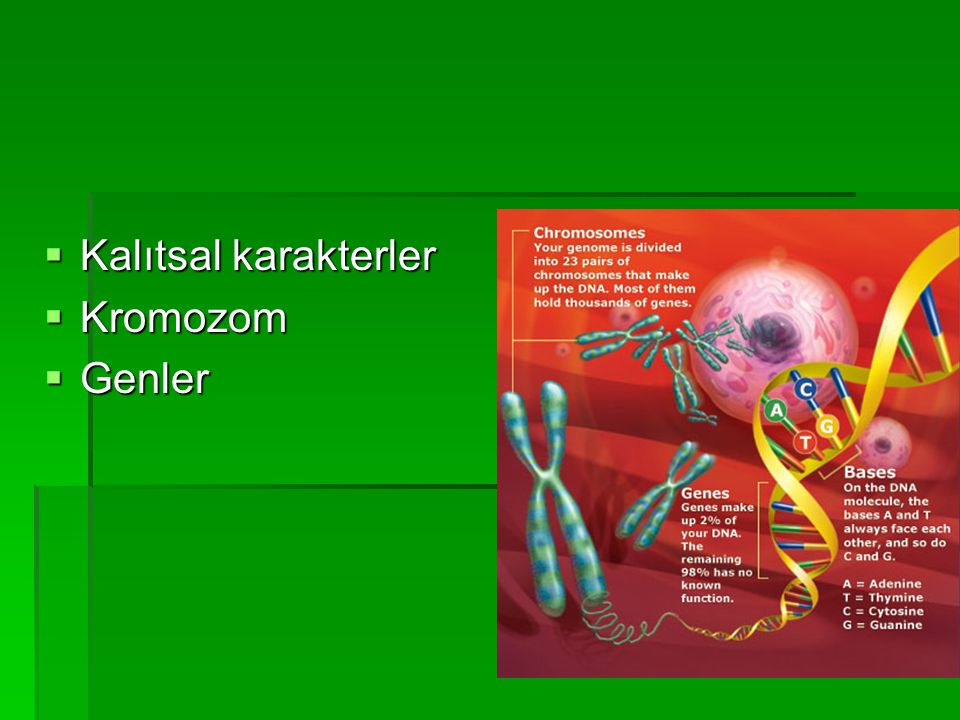  Kalıtsal karakterler  Kromozom  Genler