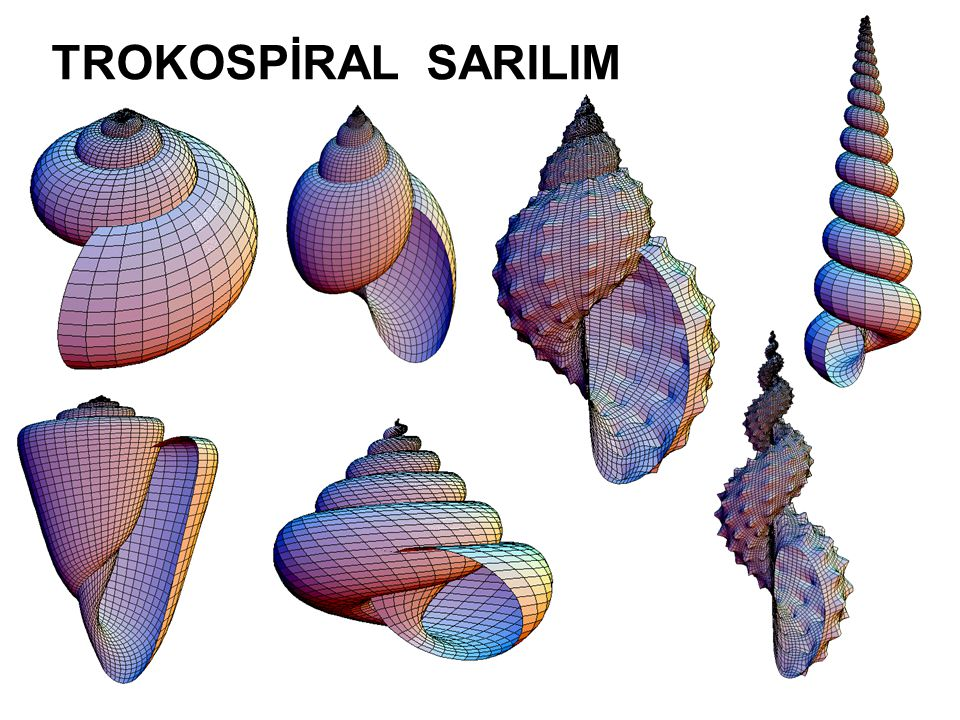 TROKOSPİRAL SARILIM