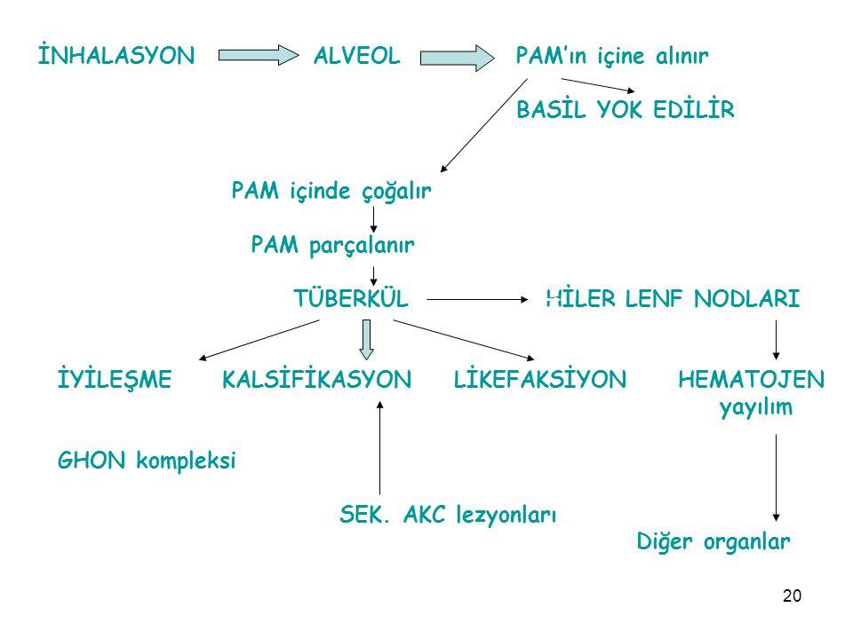 20 İNHALASYON ALVEOL PAM'ın içine alınır BASİL YOK EDİLİR PAM içinde çoğalır PAM parçalanır TÜBERKÜL HİLER LENF NODLARI İYİLEŞMEKALSİFİKASYON LİKEFAKSİYON HEMATOJEN yayılım GHON kompleksi SEK.