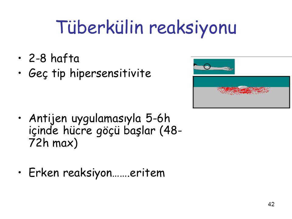 42 Tüberkülin reaksiyonu 2-8 hafta Geç tip hipersensitivite Antijen uygulamasıyla 5-6h içinde hücre göçü başlar (48- 72h max) Erken reaksiyon…….eritem