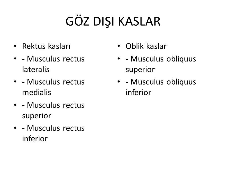 GÖZ DIŞI KASLAR Rektus kasları - Musculus rectus lateralis - Musculus rectus medialis - Musculus rectus superior - Musculus rectus inferior Oblik kaslar - Musculus obliquus superior - Musculus obliquus inferior