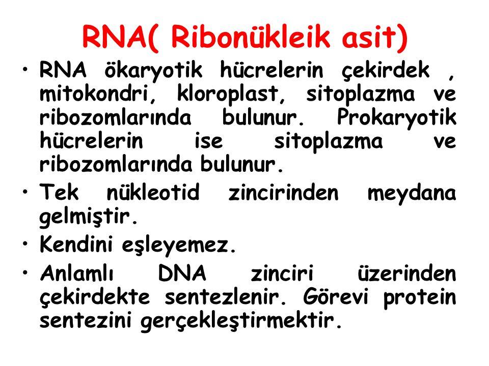 Hucrede yeni proteinlere gereksinim olduğunda DNA'dan RNA'lar sentezlenir.