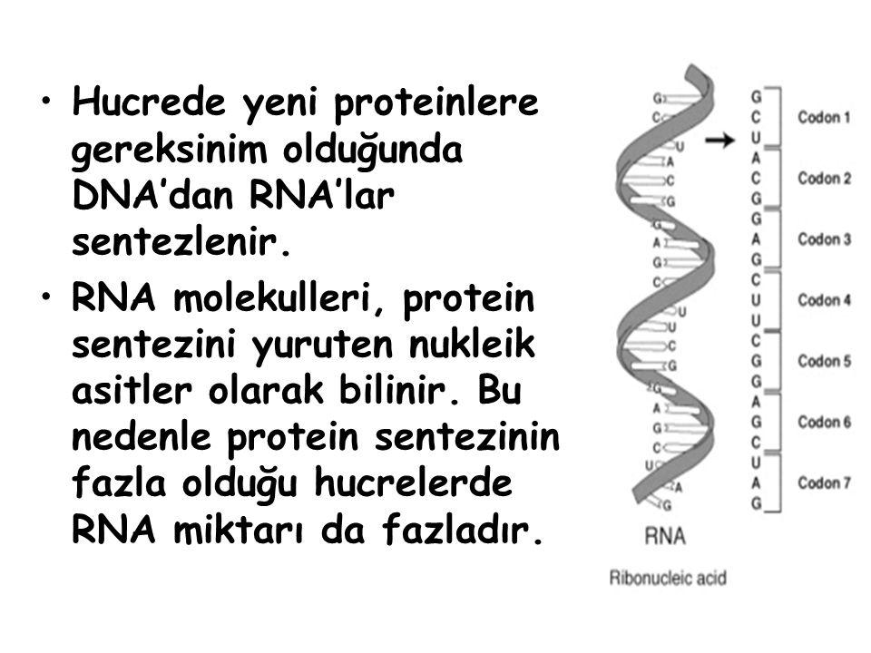 Özel şekeri RİBOZ, özel bazı URASİL dir.Görevlerine göre üç çeşit RNA vardır: 1.