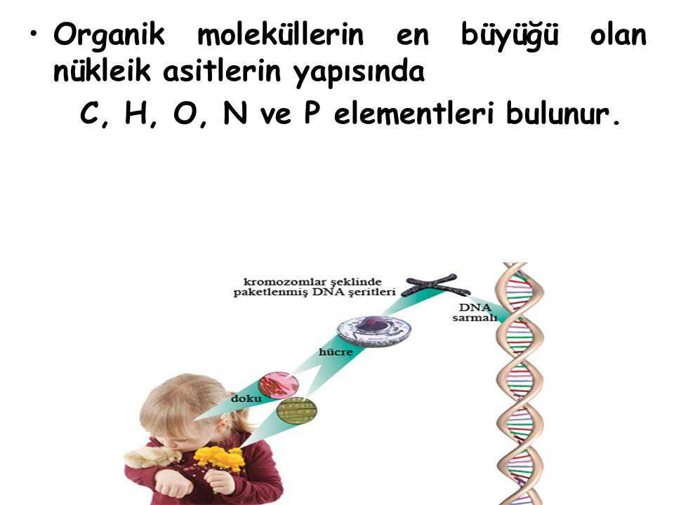 Nukleik asitler DNA ve RNA olmak uzere iki farklı molekulden meydana gelmiştir.