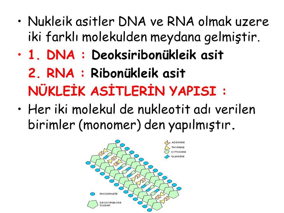 Bir nükleotidin yapısında : 1) Fosfat grubu ( P ) 2) 5 Karbonlu şeker : Riboz (RNA'da) Deoksiriboz ( DNA'da 3) Azotlu Organik Baz ( Pürin ve Pirimidinler) Pürin bazları : (Çift halkalı ) Adenin ( A ) Guanin ( G ) Pirimidin bazları:(Tek halkalı ) Sitozin ( S ) Timin ( T ) Urasil ( U )