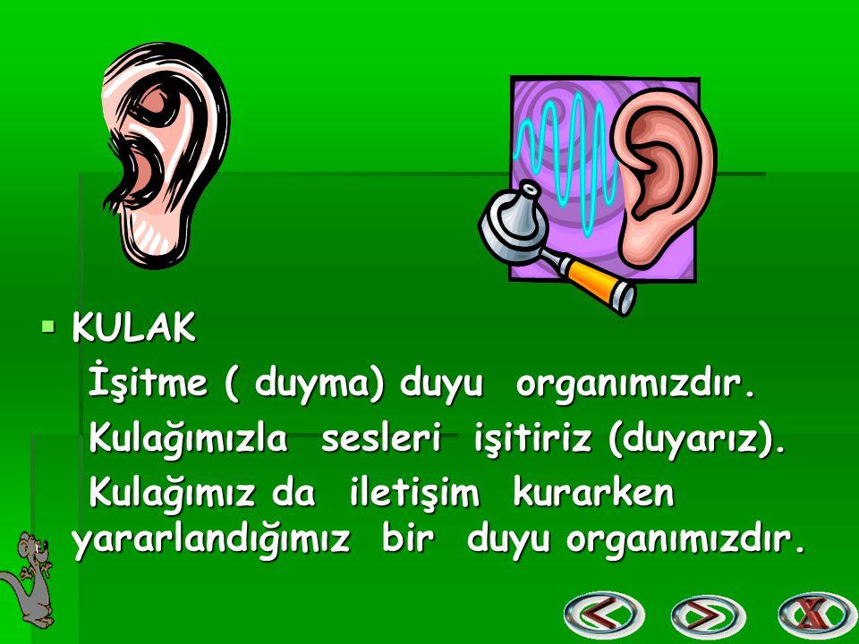  KULAK İşitme ( duyma) duyu organımızdır. İşitme ( duyma) duyu organımızdır. Kulağımızla sesleri işitiriz (duyarız). Kulağımızla sesleri işitiriz (du