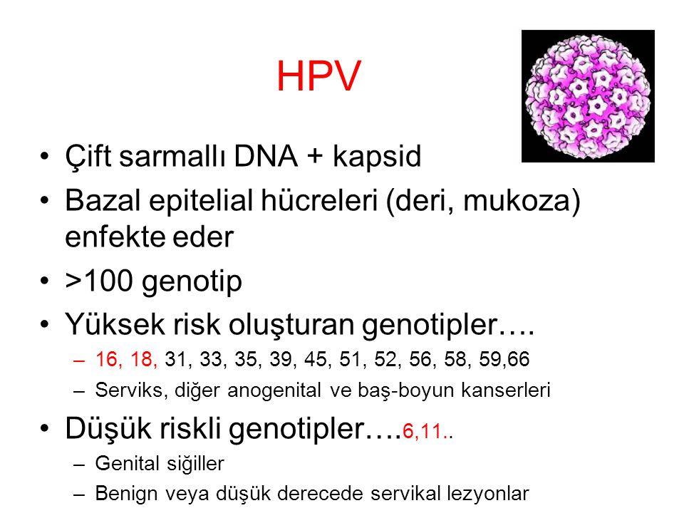 HPV Çift sarmallı DNA + kapsid Bazal epitelial hücreleri (deri, mukoza) enfekte eder >100 genotip Yüksek risk oluşturan genotipler…. –16, 18, 31, 33,