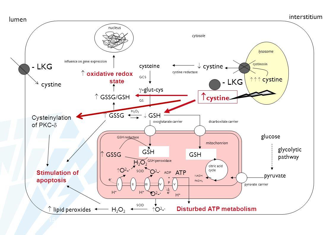 15 lysosome mitochonrion nucleus    cystine  cystine cysteine cystine reductase cystinosin GCS  -glut-cys GS  GSH oxoglutarate carrier I IIIIIIV V ATP O2-.O2-.