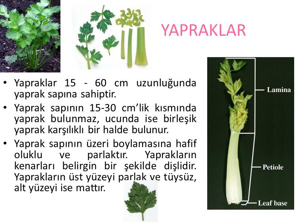 YAPRAKLAR Yapraklar 15 - 60 cm uzunluğunda yaprak sapına sahiptir. Yaprak sapının 15-30 cm'lik kısmında yaprak bulunmaz, ucunda ise birleşik yaprak ka
