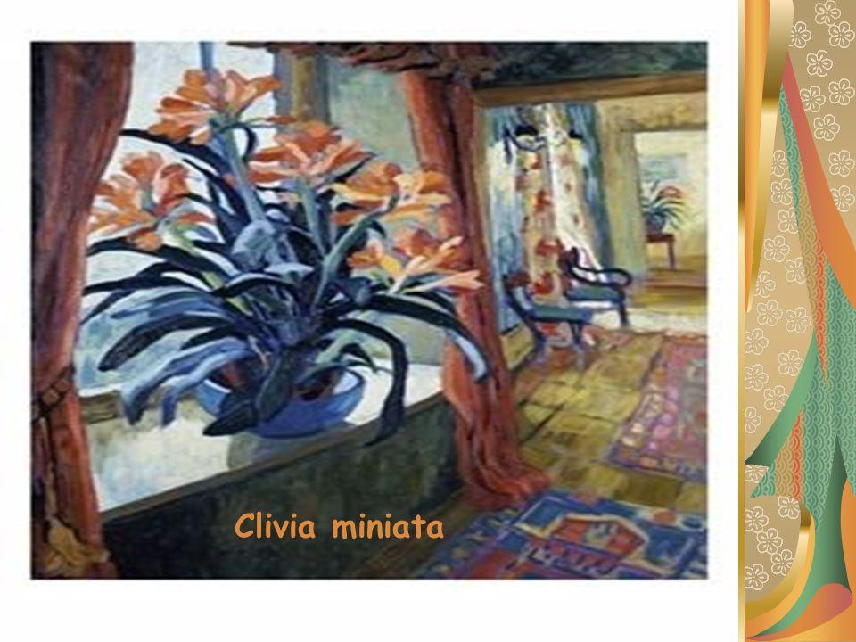 Familya : Amaryllidaceae Botanik Adı : Clivia miniata Türkçe Adı : Klivya Anavatanı : Güney Afrika