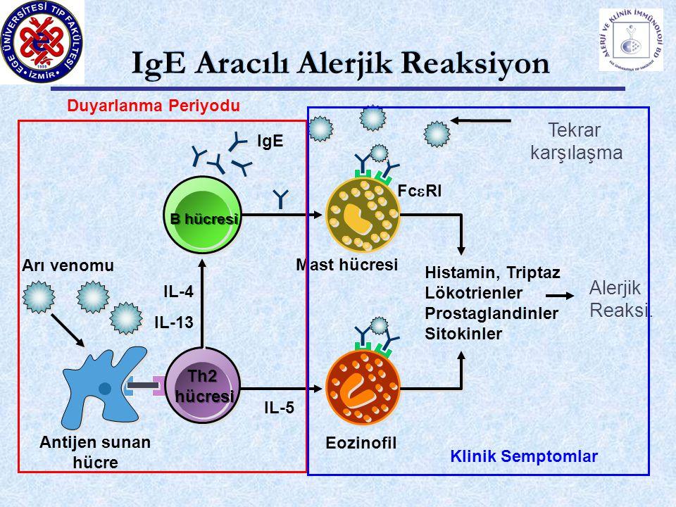 Th2 hücresi Th2 hücresi B hücresi Eozinofil IL-4 IL-13 Mast hücresi Fc  RI IgE Histamin, Triptaz Lökotrienler Prostaglandinler Sitokinler Alerjik Reaksi.