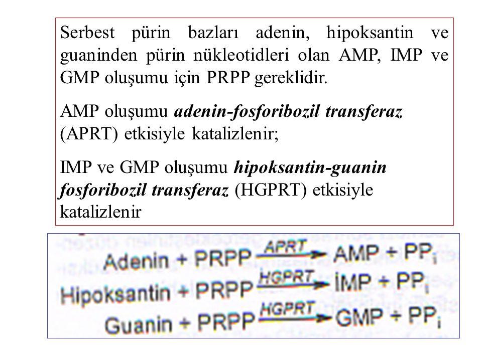 Serbest pürin bazları adenin, hipoksantin ve guaninden pürin nükleotidleri olan AMP, IMP ve GMP oluşumu için PRPP gereklidir. AMP oluşumu adenin-fosfo